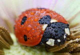 Some vivid and beautiful close up pictures of our creepy-crawly friends.