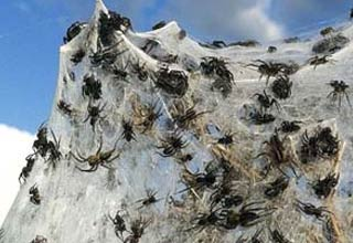 The terrible flooding has caused 13,000 to leave their homes, but something worse happened......spiders also had to evacuate.