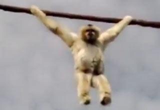 """You wan't a show, I'll give you a show!"" Said the monkey."