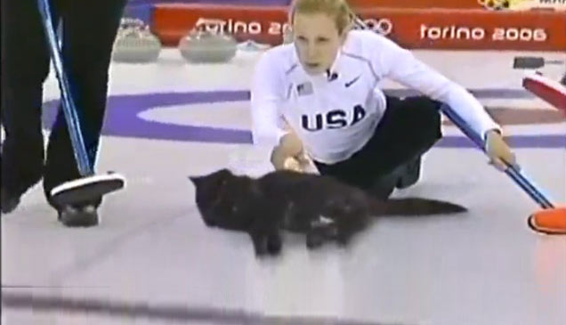 Olympic Cat Curling - ... Ivanka Trump Twitter