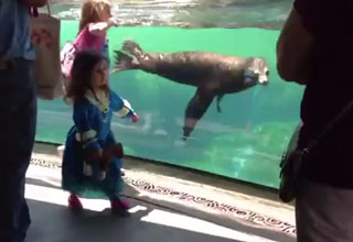 A little girl plays tag with a sea lion at an aquarium. When the little girl falls, the sea lion is clearly very concerned.