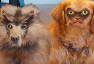 These animal face swaps will either make you laugh or give you really terrible nightmares.