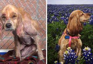 These photos reveal some of the incredible transformations that take place after these dogs are picked up off the streets and put into loving homes.