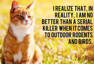 A few of the thoughts that cats probably have on a day-to-day basis.