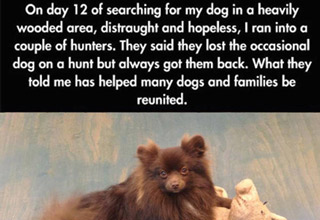 Useful tactics to help you find your lost dog.