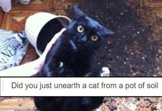 So many cats so little time. But luckily it's the weekend so you can worry less about the time crunch. Here are 48 of the best responses to cats doing some pretty questionable things.  But before your scroll through a massive list of cat memes, check out the <a href=https://cheezburger.com/2034181/top-10-cat-memes-of-the-week-cheezburgers-users-edition-1>top 10 cat memes</a> of the week. Or check out a collection of <a href=https://cheezburger.com/1633029/33-funny-cat-memes-that-never-fail-to-make-us-lol>classic cat memes</a> that no matter how much time passes, just never seem to get old.