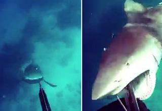 Shark Attack Fishermans Den — VACA