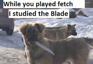 Random pictures | meme of dog with knife and studied the blade catchphrase
