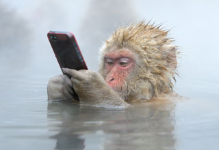 Welcome to the eBaum's World Caption Contest #122 -Monkey Phone
