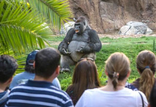 caption contest of a gorilla giving a lecture