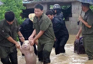 Welcome to the eBaum's World Caption Contest #142 - Pig Rescue