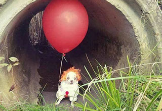 we all bork down here