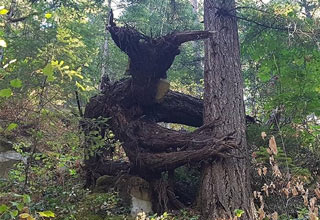 These 19 trees will blow your mind!