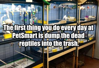 The first thing you do every day at PetSmart is dump the dead reptiles into the trash. We treated them as well as we could once they were in the store -- given our fairly minimal resources -- but they're mistreated in transit and often die within a day of