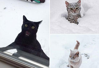 Our furry feline friends take on their mortal enemy, snow.