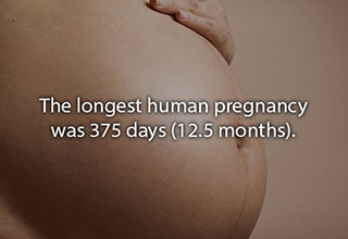 the longest pregnancy was 12 months