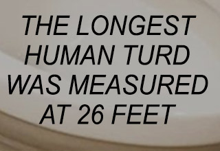 A collection of bizarre and disturbing facts.