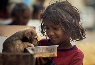 Boy feeds dog