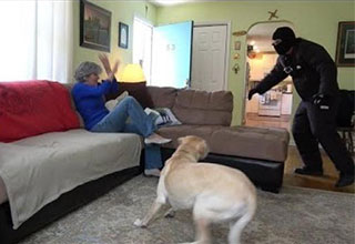 Pitbull Saves Owner from Loose Dog Attack! INCREDIBLE! - Wow