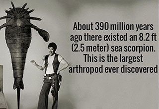 Interesting facts about anything and everything.