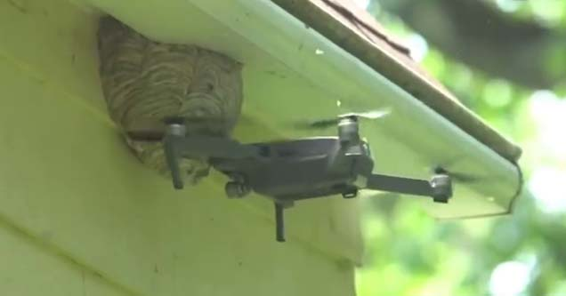 drone hitting a wasps nest