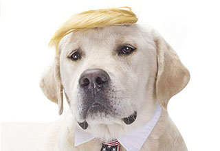 Halloween is right around the corner and we think Trump cat might be the best costume of the year!