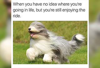 Enjoying these memes is good for your health! The only thing more healthy is possibly laugther. So how about you get the best of both world's with these <a href=https://cheezburger.com/2647557/13-confused-dog-photos-and-memes-that-will-leave-you-laughing>hilarious hounds</a>.  <br><br> What do you get when you cross a dog with a calculator?  <br><br> A friend you can always count on. <br><br> Sometimes there is just never enough of a good thing. The only idea that comes to mind are memes, so with that in mind, we are here to offer to help perpetuate your obsession with the canine persuasion with a list of <a href=https://cheezburger.com/6913285/25-dog-memes-to-satisfy-your-doggo-obsession>dog memes</a> meant to satisfy even the most hardcore dog-lover. Or if all you need is a little pick me up, try some <a href=https://cheezburger.com/5408517/19-wholesome-dog-memes-that-are-too-pure>angelic doggos</a>  who are bursting with good vibes and wholesome fun.