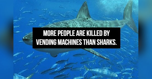 Shark in the water with text over it.