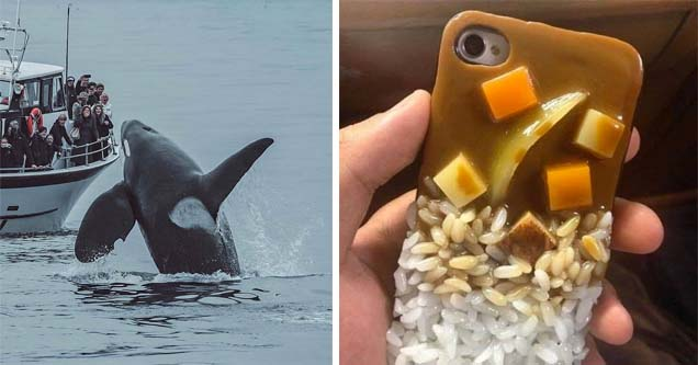 a whale next to a boat of people and a phone case that looks like curry