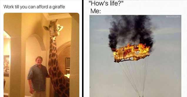 A guy with a giraffe and a on fire parachute.