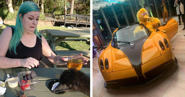 a woman with green hair making a funny face as an ostrich or emu knocks over her drink and big bird getting out of an orange supercar