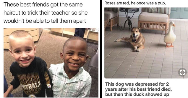 19 Wholesome Memes And Pics To Restore Your Faith In Humanity Feels Gallery