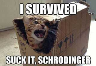 newest collection 5277b 1db87 Funny science meme of a cat in a cardboard box and the caption I survived