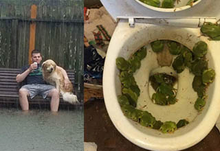 Dog and man in storm. Frogs in toilet.
