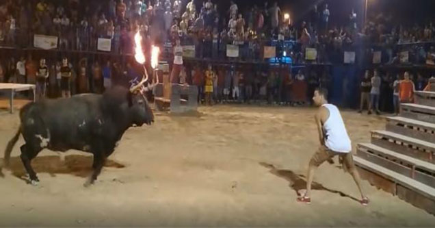 dude standing in front of a bull with it's horns on fire