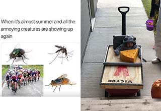 insects as a meme and a kid dressed as a mouse trap