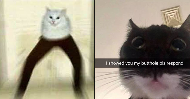 Creepy cat with human legs and a funny snapchat cat meme