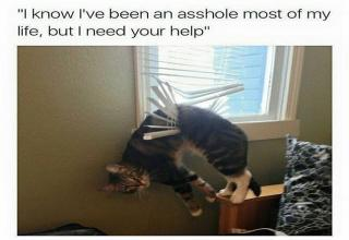12 Funny Pictures of Animals That'll Crack You Up - Funny Gallery