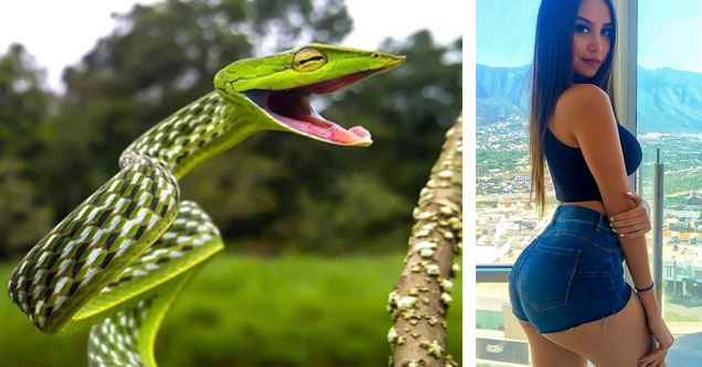 a green snake making a funny face and a girl with tight short jean shorts and a big ass