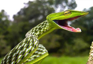 a green snake making a funny face