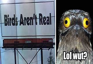 Birds Aren't Real campaign billboard next to funny looking bird