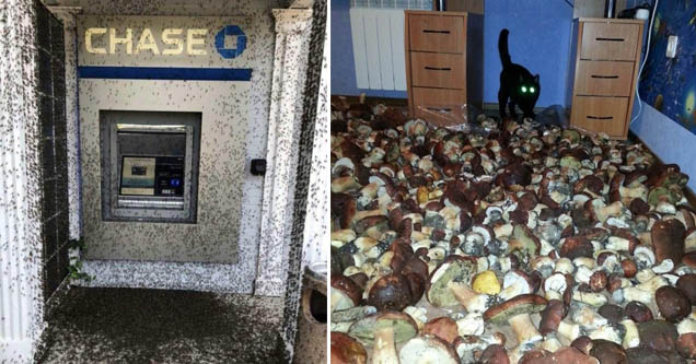 an atm with insects all over it, a cat with mushrooms around it