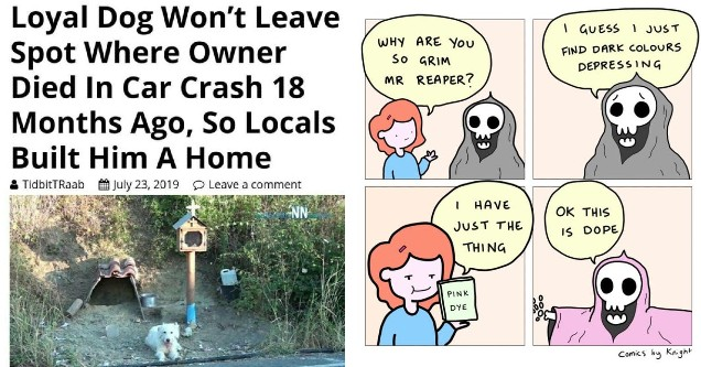 clean meme - loyal dog won't leave spot where owner died in a car crash 18 months ago so locals built him a home and a meme about the grim reaper changing to a pink outfit.