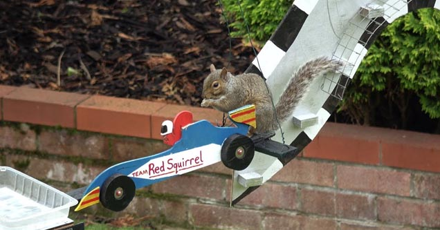 a squirrel on a car in the garden