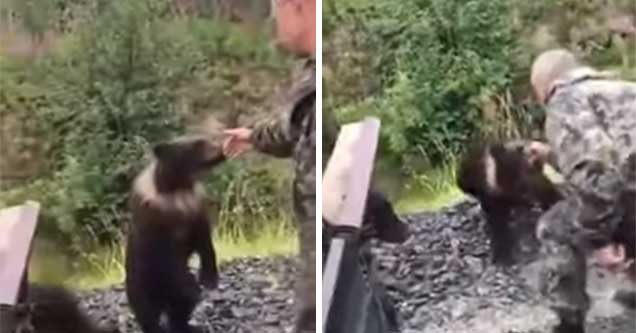Russian man tries petting bear cub, cub tries to eat his hand