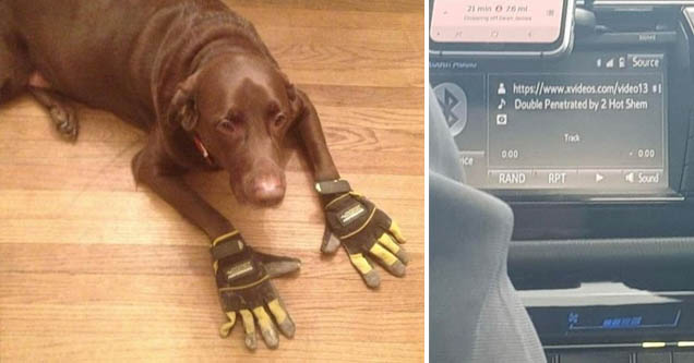 a dog with gloves on the floor and a pornographic title on the hud of a car