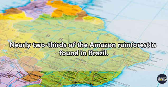 Amazon rainforest facts - nearly two thirds of the Amazon rainforest is found in Brazil