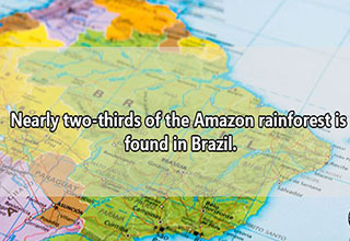 "The <a href=""https://www.ebaumsworld.com/articles/the-amazon-rainforest-is-on-fire/86045595/"" rel=""noopener noreferrer"" target=""_blank""><em>Amazon</em></a> accounts for 20% of all globally oxygen production and it currently is being burnt to the ground by Brazilian <a href=""https://www.ebaumsworld.com/articles/indigenous-woman-claims-the-amazon-is-being-set-on-fire/86046932/"" rel=""noopener noreferrer"" target=""_blank""><em>cattle farmers</em></a>."
