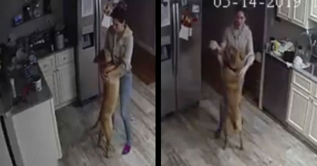 dog dancing with a woman