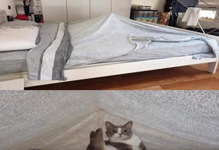 a cat under the covers sticking its foot up